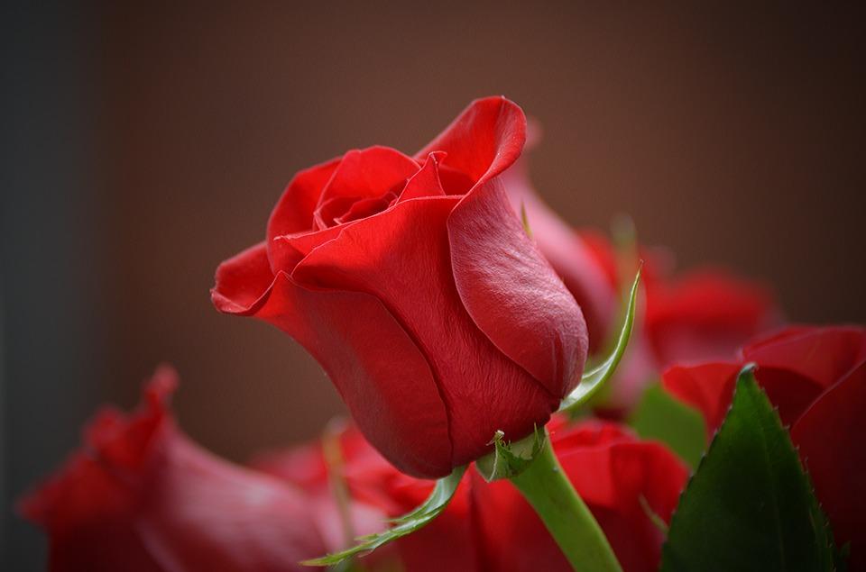 Преимущества услуг по доставки роз и других цветов