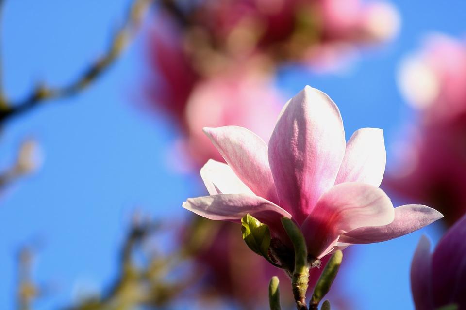 Выбор и покупка семян красивых цветов