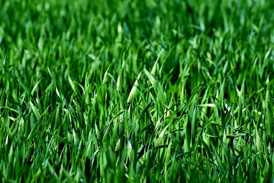 Важные преимущества использования рулонного газона