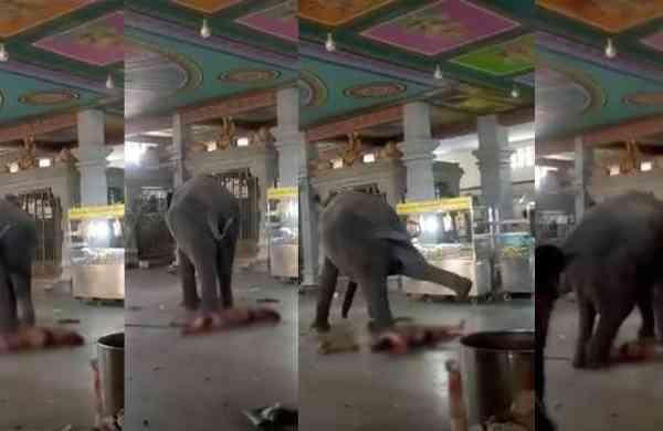 Слон устроил кровавую бойню в индуистском храме (ВИДЕО 18+)