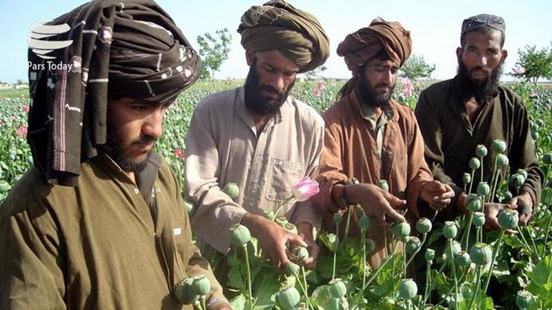 Афганцы демонстрируют урожай опийного мака