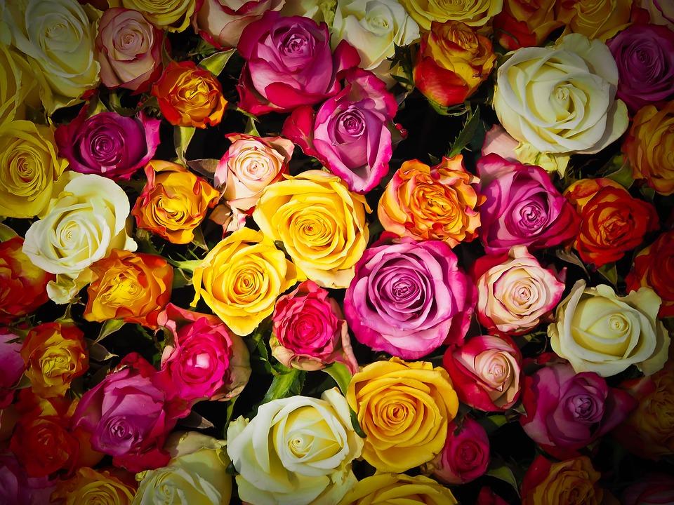 Почему популярными цветами для подарка остаются розы?