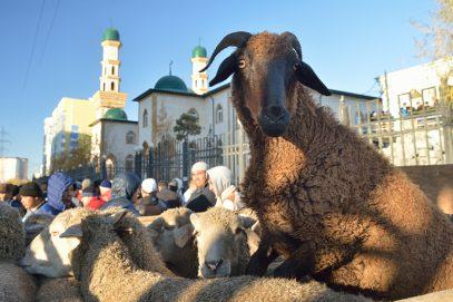 В мусульманских республиках России Курбан-байрам объявлен выходным