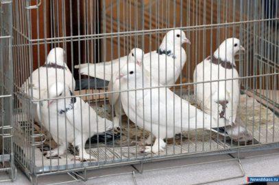 В Ингушетии птиц используют для праздника жертвоприношения