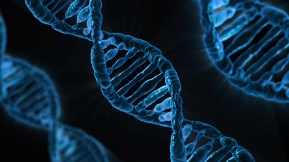 Проведение ДНК теста – востребованная и точная услуга