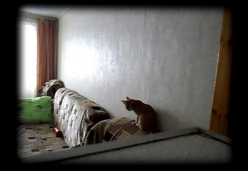 В Белгороде выявляли религиозных экстремистов с помощью скрытой камеры в однушке супружеской пары