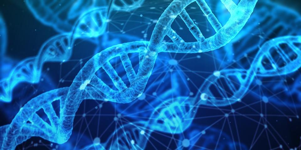 Какой ДНК центр выбрать для проведения анализов и тестов?