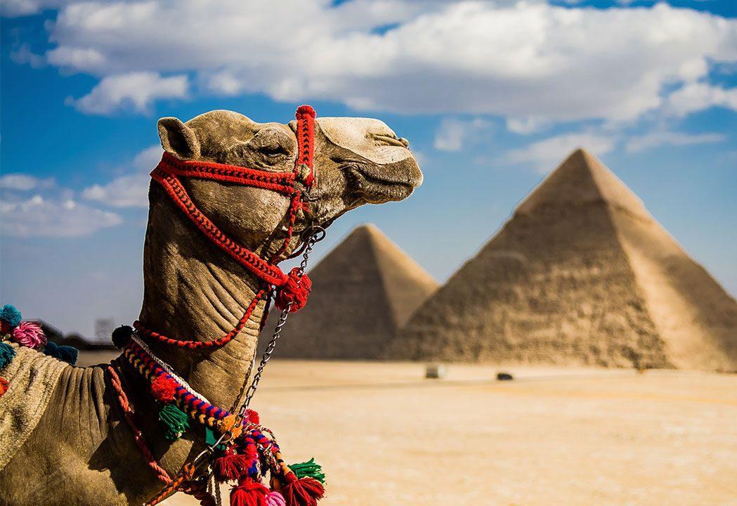 Путин подарил надежду любителям недорогих египетских курортов