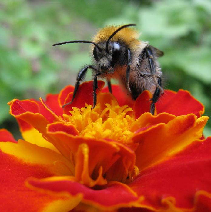 Насекомые слетаются на яркие цветы. Это помогает процессу опыления