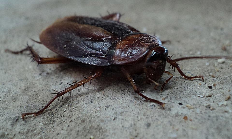 Польза ответственных услуг по уничтожению различных видов насекомых