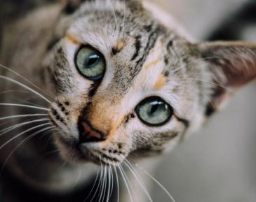 Реакция кошки на азан позабавила соцсети (ВИДЕО)