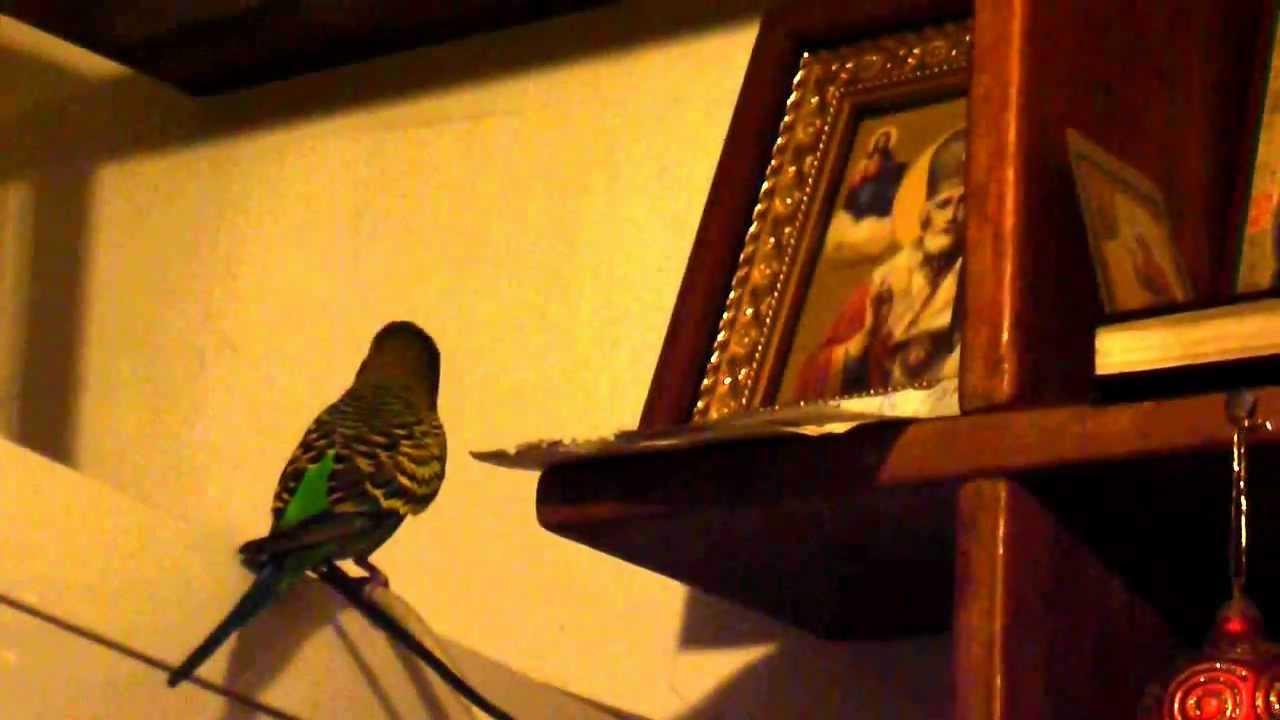 Попугай в церкви