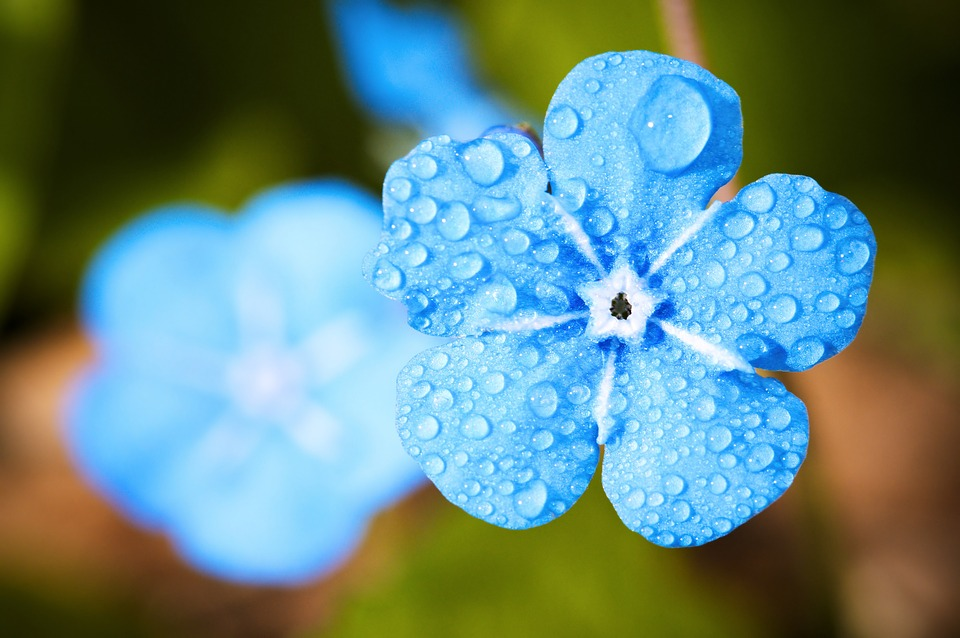 Красивые и свежие цветы являются отличным подарком.