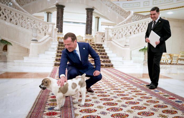 Медведев с новым питомцем
