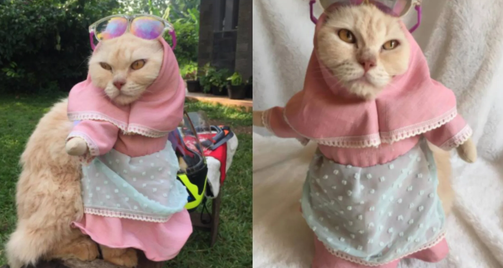 Кошка в хиджабе