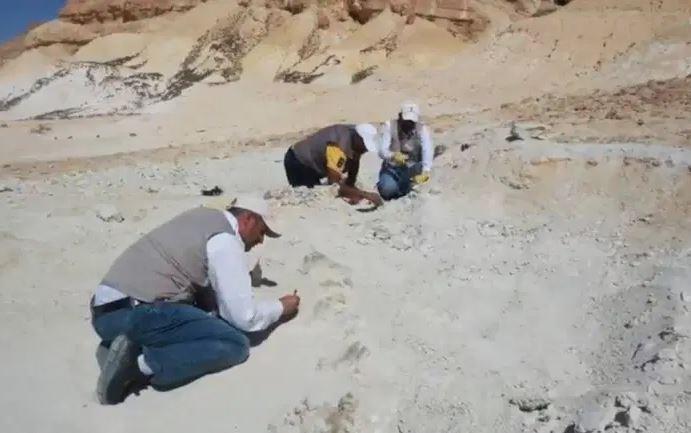 Раскопки на месте обнаружения останков кита